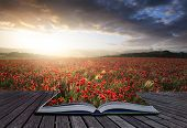 stock photo of suny  - Creative concept pages of book Beautiful landscape image of Summer poppy field under stunning sunset sky - JPG