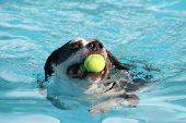 a dog having fun at a swimming pool