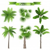 stock photo of banana tree  - 3 different palm trees  - JPG