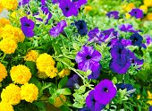 Yellow And Lilac Flowers