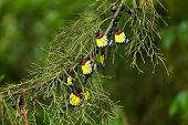 pic of cocoon tree  - Beautiful color of butterfly hanging on pine tree - JPG