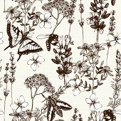 picture of salvia  - Vector seamless pattern with ink hand drawn herbs illustration in retro color - JPG