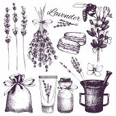 stock photo of lavender plant  - Vector set of ink hand drawn lavender illustration in lilac color - JPG