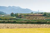 stock photo of andong  - view of terraced rice field in autumn in Andong Korea - JPG