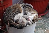 picture of flower pot  - Cat sleeping in flower pot - JPG