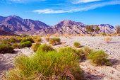 California Desert Lands poster