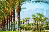 Palms Road Coachella Valley poster