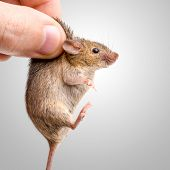 stock photo of human beings  - Tiny house mouse  - JPG