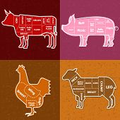 stock photo of lamb shanks  - Vector illustration of beef pork lamb and chicken and cooking tools - JPG