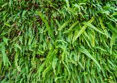pic of fern  - Nature Green Fresh Fern to use as a Background - JPG