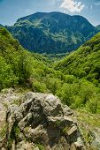 image of afforestation  - Beautiful landscape with afforested mountain on springtime - JPG