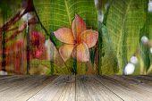image of plumeria flower  - Wood terrace and Plumeria Flower on Wood wall texture background - JPG