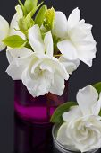 image of gardenia  - Bouquet of fresh White Gardenias placed in small red mason jars on white or black background as a decoration for a table - JPG