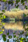 foto of tsarskoe  - Autumn pond reflection during day in autumn - JPG