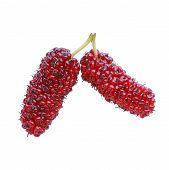stock photo of mulberry  - red mulberry fruit isolated on white background - JPG