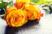 stock photo of orange  - Rose - JPG
