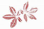 stock photo of chestnut horse  - Red horse chestnut leaves on a  white background - JPG