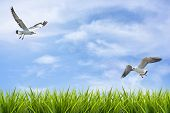 image of grass bird  - field of grass under sky and flying birds background - JPG