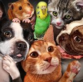 stock photo of petting  - Pet group concept as dogs cats a hamster and budgie gathered together as a symbol for veterinary care and support or pets store design element for home animals advertising and marketing - JPG