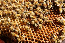 picture of jungle animal  - Beekeeping at Vietnam Vietnamese agriculture group of bee tank group of beehive in Dalat jungle honey is nutrition eating bee working at bee nest - JPG