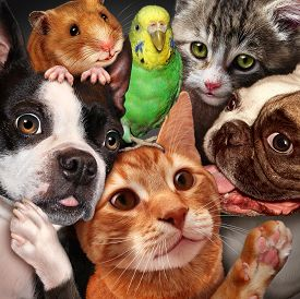 image of gathering  - Pet group concept as dogs cats a hamster and budgie gathered together as a symbol for veterinary care and support or pets store design element for home animals advertising and marketing - JPG