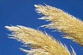 Golden Grass And Sky poster