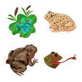 Isolated Object Of Frog And Anuran Logo. Collection Of Frog And Animal Stock Bitmap Illustration. poster