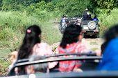Vehicles Inside View Ranthambore National Park Rajasthan India. Group Of Tourists Jungle Safari Visi poster