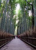 Famous Bamboo Grove At Arashiyama In Kyoto, Japan. The Arashiyama Bamboo Grove Is One Of The Top Sig poster