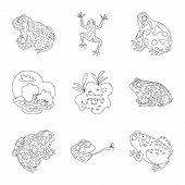 Bitmap Illustration Of Amphibian And Animal Logo. Set Of Amphibian And Nature Stock Bitmap Illustrat poster