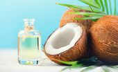 Coconut palm oil in a bottle with coconuts and green palm tree leaf on a blue and  white background. poster