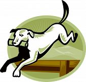 Retriver Dog Trainiing Jumping Hurdle Retro