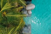 Top View Of Luxury Infinity Pool In Tropic With Palm Trees. Luxurious Villa, Swimming Pool. Drone Ph poster