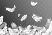 White Feathers Background. Falling Flying Fluffy Swan, Dove Or Angel Wings Feather, Soft Bird Plumag poster