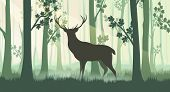 Deer In Forest Silhouettes. Wood Horizontal Foresting Ponarama With Trees Trunks And Wildlife Deer S poster