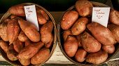 Two bushels of sweet potatoes