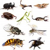pic of oryctes  - insects and scorpions in front of white background - JPG