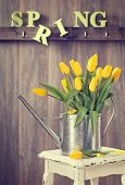 foto of spray can  - Spring tulips in watering can on rustic table - JPG