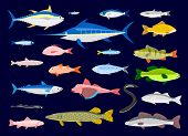 stock photo of bass fish  - 22 Edible Fishes in simplified flat vector cartoon - JPG