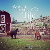 pic of reign  - instagram of miniature ponies at farm with quotation - JPG