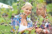 stock photo of aronia  - Male and female gardeners looking at aronia crops - JPG
