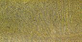 foto of lizard skin  - this is textured of green iguana skin - JPG