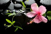 pic of tendril  - Beautiful spa setting of delicate pink hibiscus green tendril passionflower and zen stones with drops on ripple water closeup - JPG