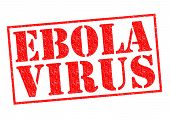 image of hemorrhage  - EBOLA VIRUS red Rubber Stamp over a white background - JPG