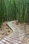 pic of bamboo forest  - Hiking through the Bamboo forest on the way to Waimoku falls in Haleakala National Park - JPG