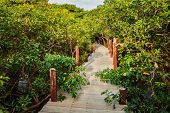 image of jungle exotic  - Tropical exotic travel concept  - JPG