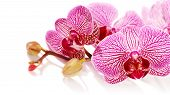 pic of tropical plants  - Branch with flowers of an orchid Phalaenopsis. Pink orchid Phalaenopsis. Beautiful branch of pink flowers. Tropical pink flowers of an orchid.
