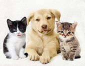 stock photo of puppy kitten  - kitten and puppy on a white background - JPG