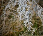 image of bohemia  - plants covered with frost southern Bohemia  - JPG