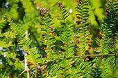 pic of fern  - A close up of a fern leaf in a garden in England - JPG